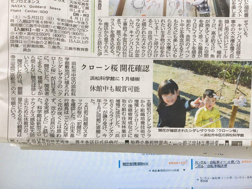 クローン桜🌸開花を静岡新聞に載せていただきました!