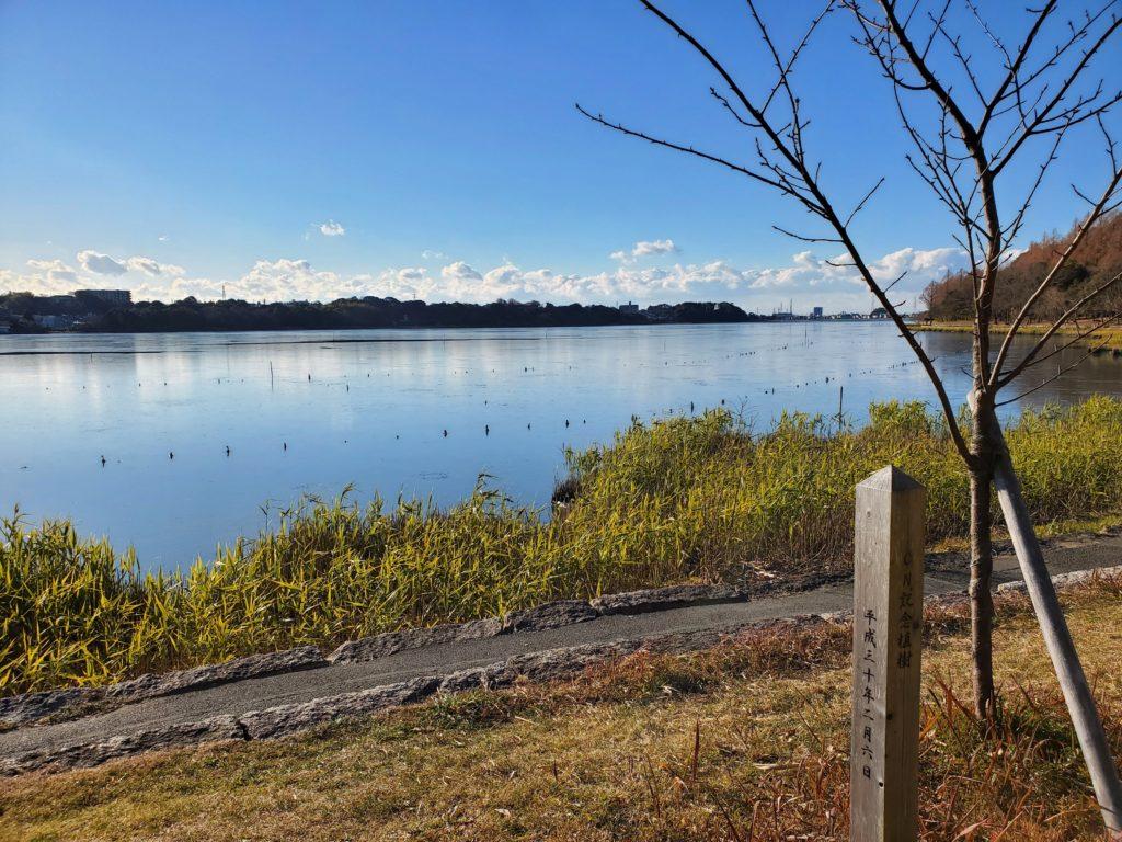河津さくらと凍る佐鳴湖